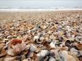 Песчано-ракушечный пляж